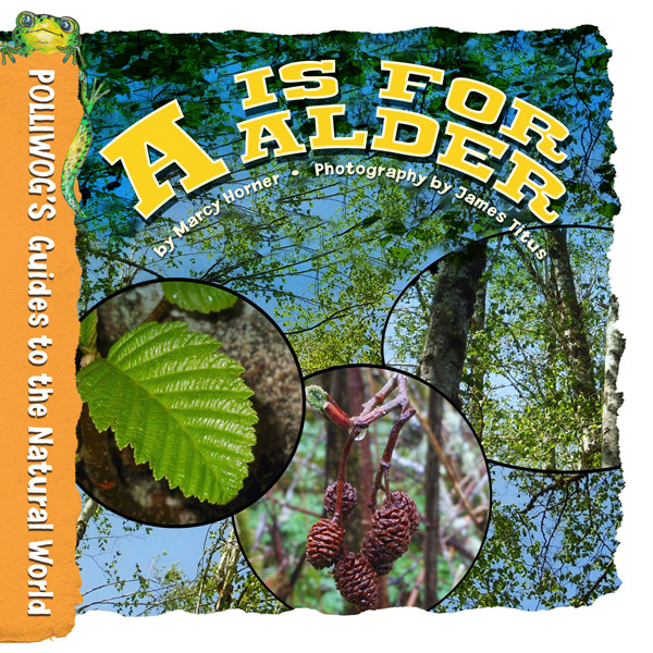A is for Alder